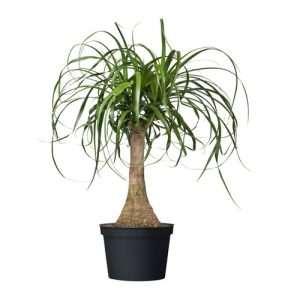 plantas de Trebole floristeria