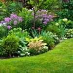 jardin flores ,plantas de exterior floristeria trebole pola de laviana la cuenca del nalon flores para bodas ,flores para funerales ,decoraciones de eventos