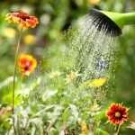como regar las plantas en floristeria trebole en pola de laviana en la cuenca del nalon en asturias ,flores para bodas flores para jardin ,flores para funerales