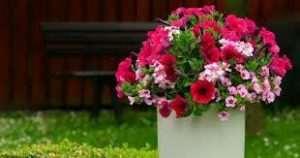 Floristeria trebole Cuidar plantas en verano